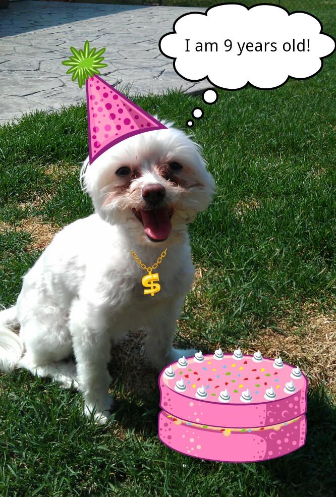 Happy birthday to Molly!