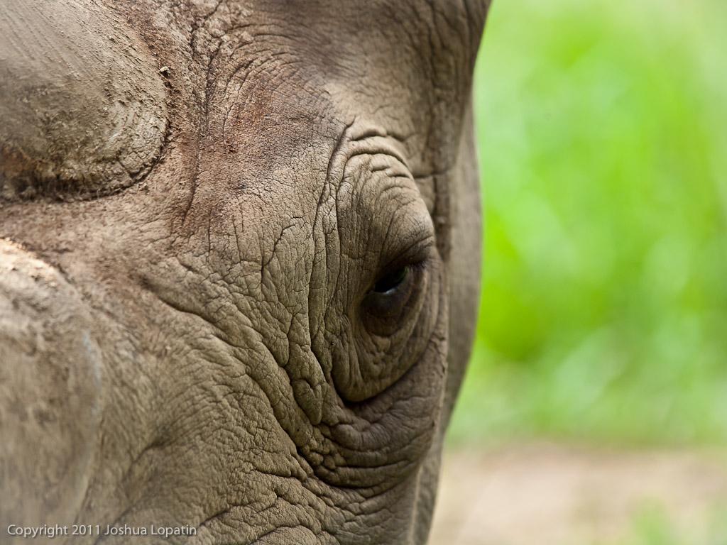 Gallery- Brookfield Zoo